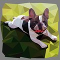 French bulldog smiles lying on grass in low poly style vector graphic