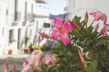 Charming streets in Frigiliana