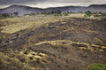 Charred landscape san diego county california the and blackened very close to houses provides a sober reminder of the brush fires Stock Images