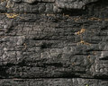 Charred log blackened after a forest fire burned through Stock Photo