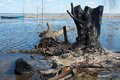 Charred stump burned on a flood lake shore spring nature landscape Royalty Free Stock Images