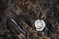Charred white snail shell on burnt hay ground Stock Photo