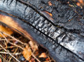 Charred wood a close up of a in the forest Stock Photography