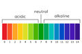 Chart ph alkaline and acidic scale vector Royalty Free Stock Photo