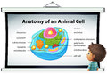 Chart showing anatomy of animal cell Royalty Free Stock Photo