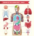 Chart showing organs of human body