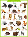 Chart of A to Z wild animals