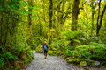 Track at the Chasm Fall, Fiordland National Park, Milford Sound, New Zealand Royalty Free Stock Photo