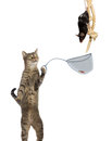 Chasseur de rats intelligent de chat Photo stock