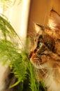 Chat dans la maison Photos stock