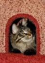 Chat dans le logement du `s de chat Images libres de droits