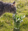Chat et perce-neige Photographie stock