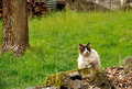 Chat sur la roche Photos libres de droits
