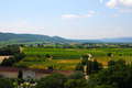 Chateauneuf du pape landscape with vineyards of the very expensive vine Royalty Free Stock Photos