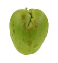 Chayote vegetable side view center a nice of with deep top indentation and stem Royalty Free Stock Photos