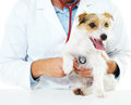 Check-ups are key to maintaining your pet's health Royalty Free Stock Photography