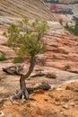 Checkerboard Mesa at Zion Royalty Free Stock Photo
