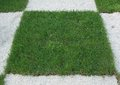 Checkered grass turf with white rocks Royalty Free Stock Image
