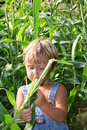 Checking the crops Royalty Free Stock Photo