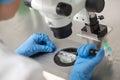 Checking result of in vitro fertilization Royalty Free Stock Photo