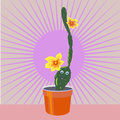 Cheerful cactus cartoon blooming in a flower pot Royalty Free Stock Images