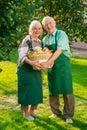 Cheerful couple holding apple basket. Royalty Free Stock Photo