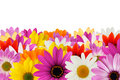 Cheerful daisy border Stock Photography