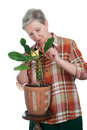 Cheerful elderly woman rubs plant leaf a Royalty Free Stock Images