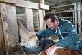 Cheerful farmer feeding cows