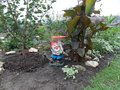 Funny gnome in the flower garden at the cottage Royalty Free Stock Photo