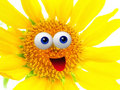 Cheerful sun flower character Royalty Free Stock Photo