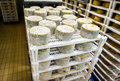 Cheese factory warehouse with shelves stacked with cheese Royalty Free Stock Photo