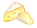 Cheese slices. Watercolor picture