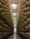 Cheese wheels maturing in cheese cellar Royalty Free Stock Photo