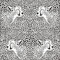 Cheetahs background Royalty Free Stock Images