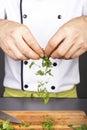Chef  preparing food with organic fresh parsley Royalty Free Stock Photo