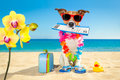 Chek in boarding pass summer dog Royalty Free Stock Photo