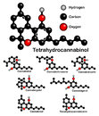 Chemical formulas of natural cannabinoids. Royalty Free Stock Photo