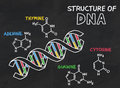 Chemical structure of DNA on a chalkboard Stock Photos