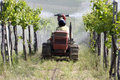 Chemical in viticulture Stock Photos