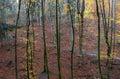 Chemin dans la forêt avec des lames d'automne Image libre de droits