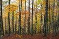 Chemin dans la forêt avec des lames d'automne Image stock