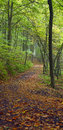 Chemin forestier Photos stock