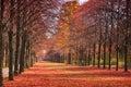 Chemin forestier d automne Photos stock