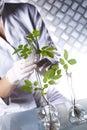 Chemistry equipment, plants laboratory experimental Royalty Free Stock Photo