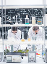 Chemistry lab analysis general view of two researchers i a analyzing under microscope on a table around tools and colorful liquids Royalty Free Stock Images