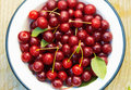Cherries in the Bowl. Stock Photos