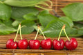 Cherries and branch with leaves studio shot Royalty Free Stock Photography