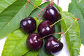 Cherries on cherry leafs five red laying green Stock Photos