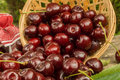 Cherries falling out of a basket Royalty Free Stock Photos
